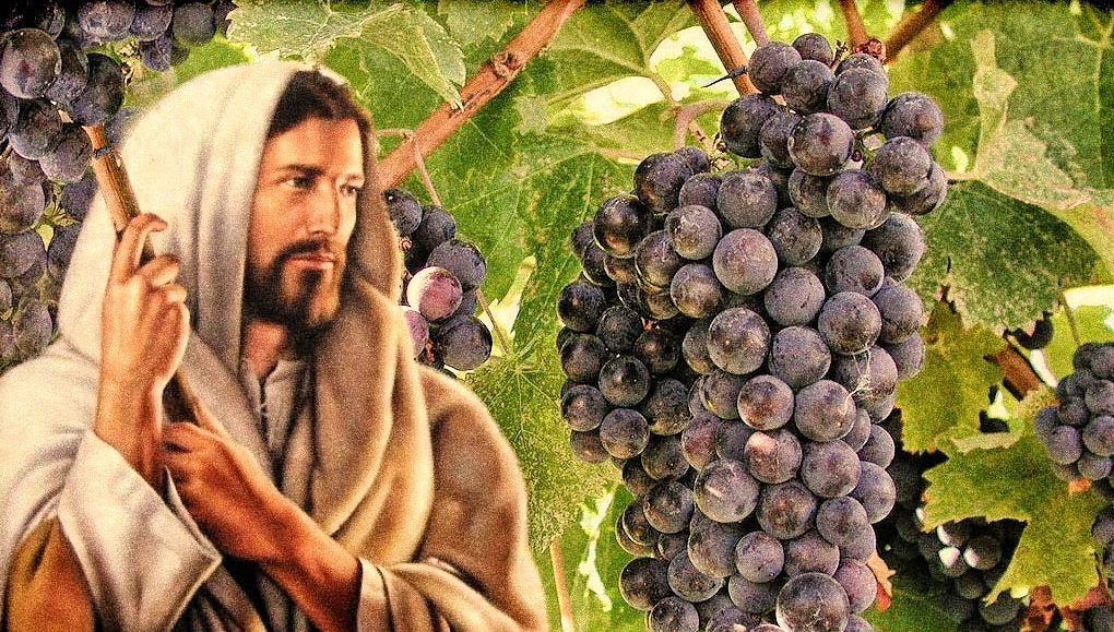 vine-and-grapes-1020x579.jpg